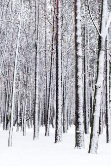 bigstock-Winter-Forest-56265137